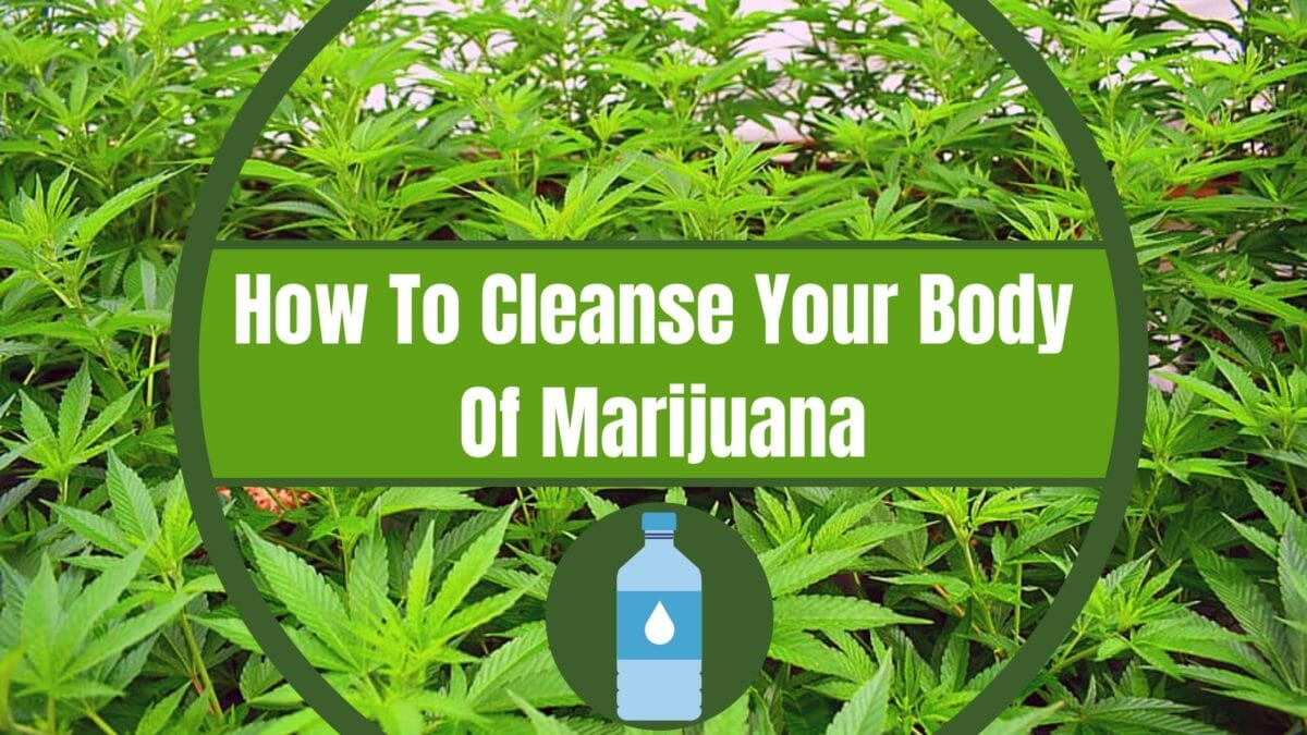 Cleanse your body from Marijuana cover