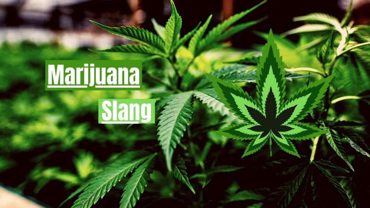 Marijuana Slang Cover