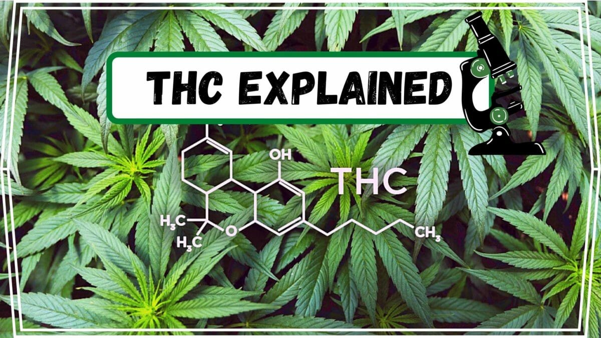 THC explained post cover