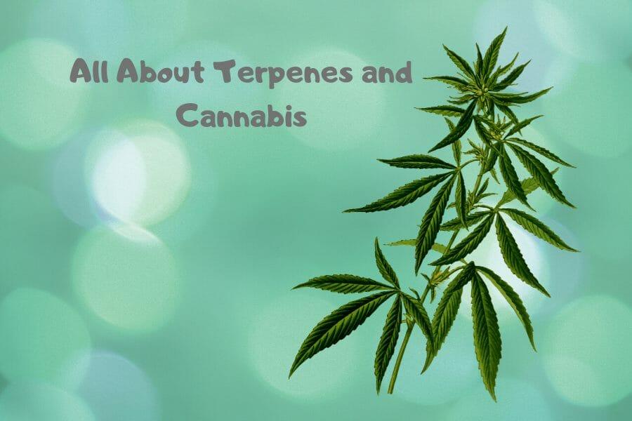 Terpenes Post Cover