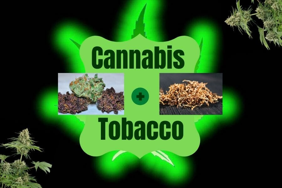 Mixing Cannabis and Tobacco