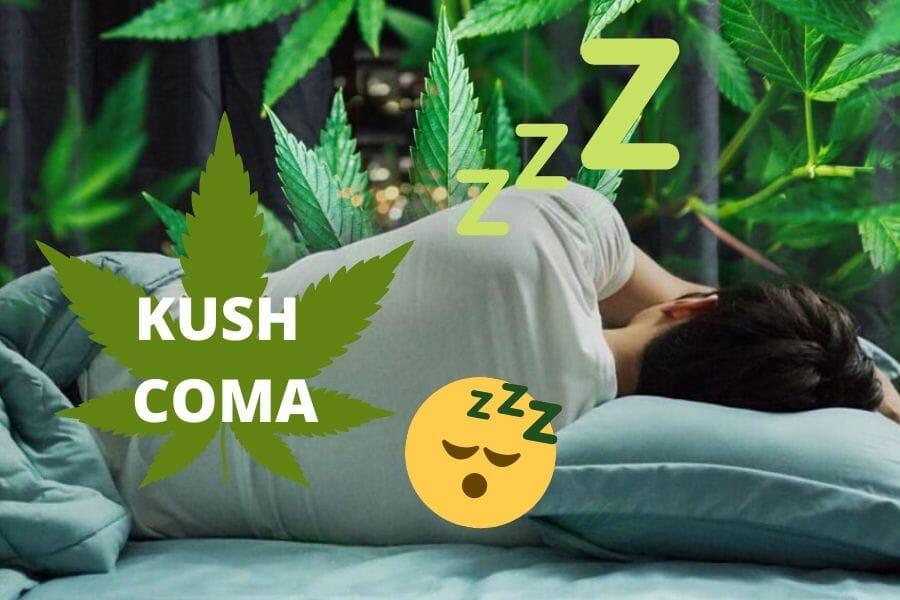 Kush Coma Cover