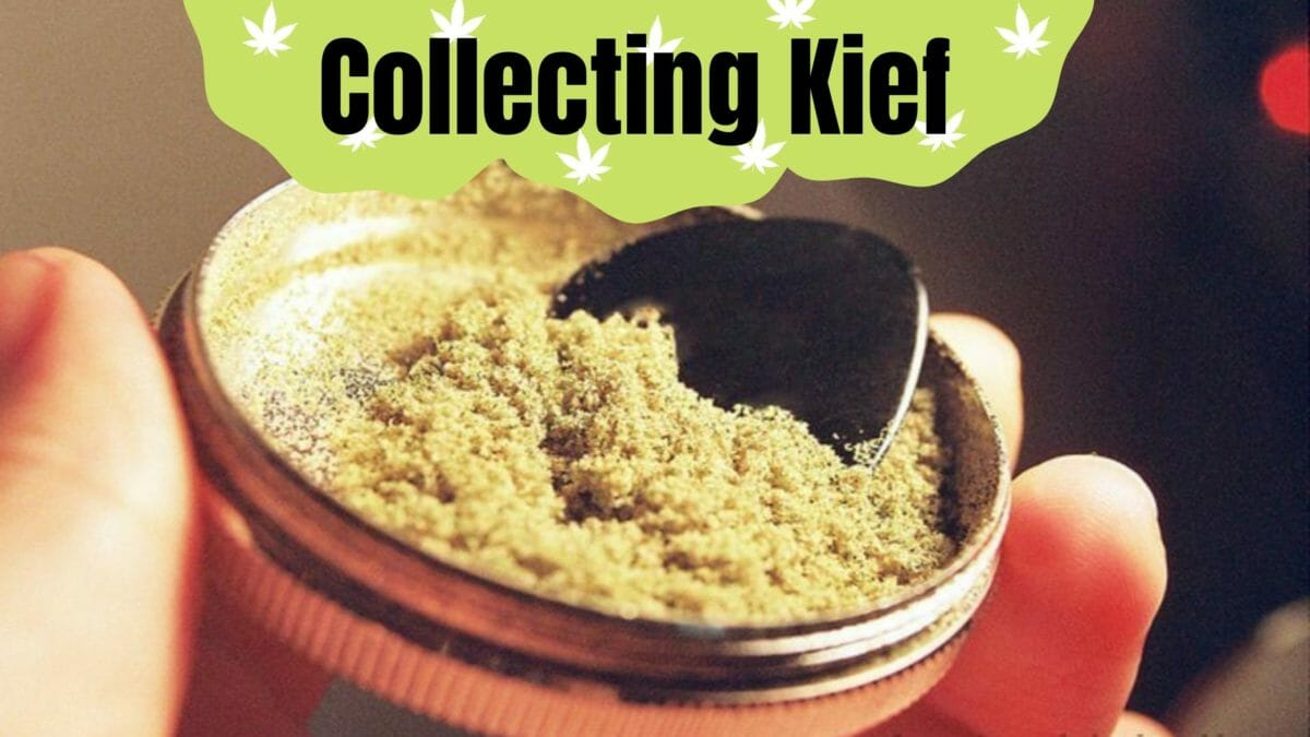 Collecting Kief cover