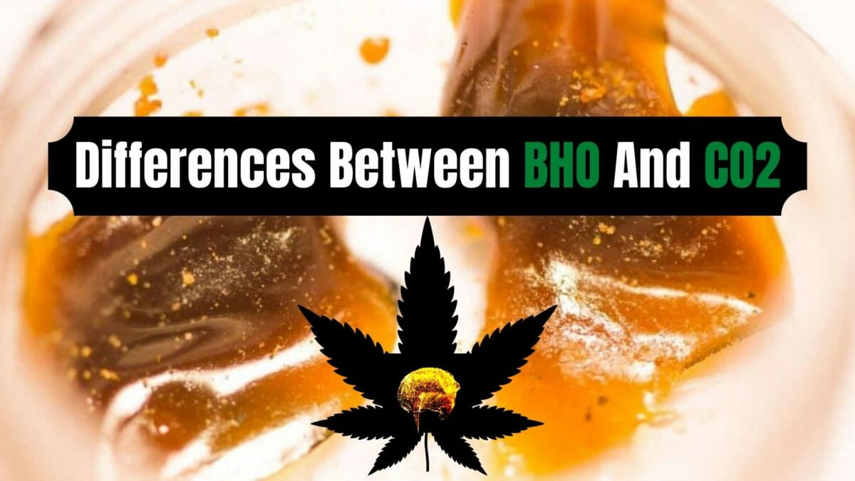 BHO vs. CO2