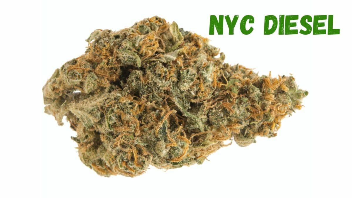 NYC Diesel Bud