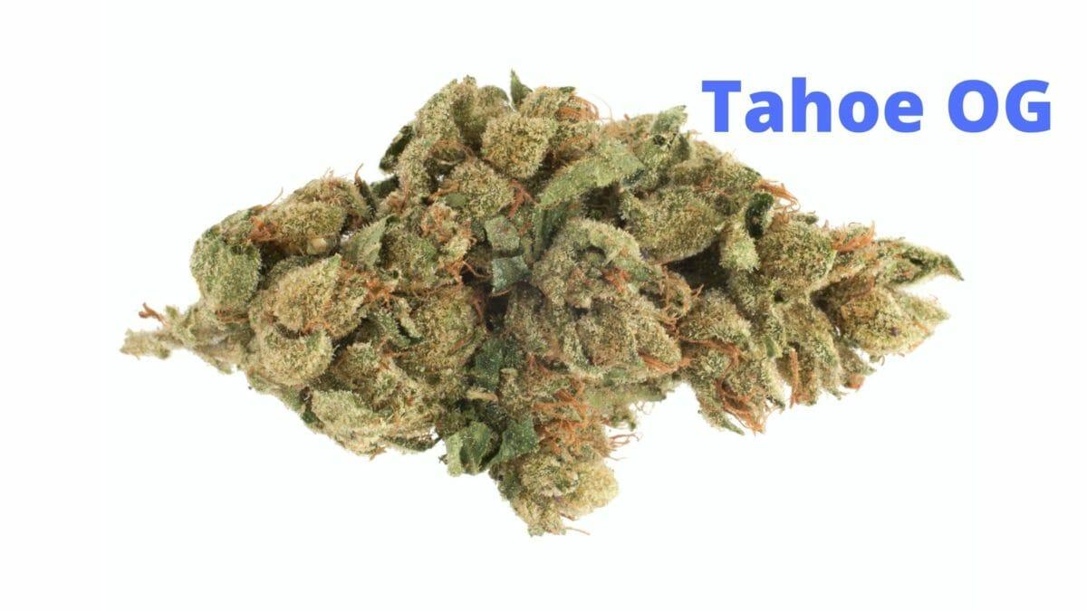 Tahoe OG Bud