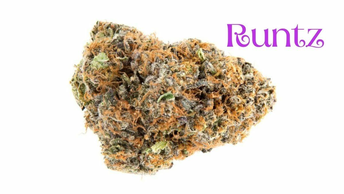 Cannabis Runtz Bud