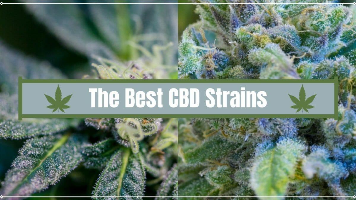 CBD Strains Cover
