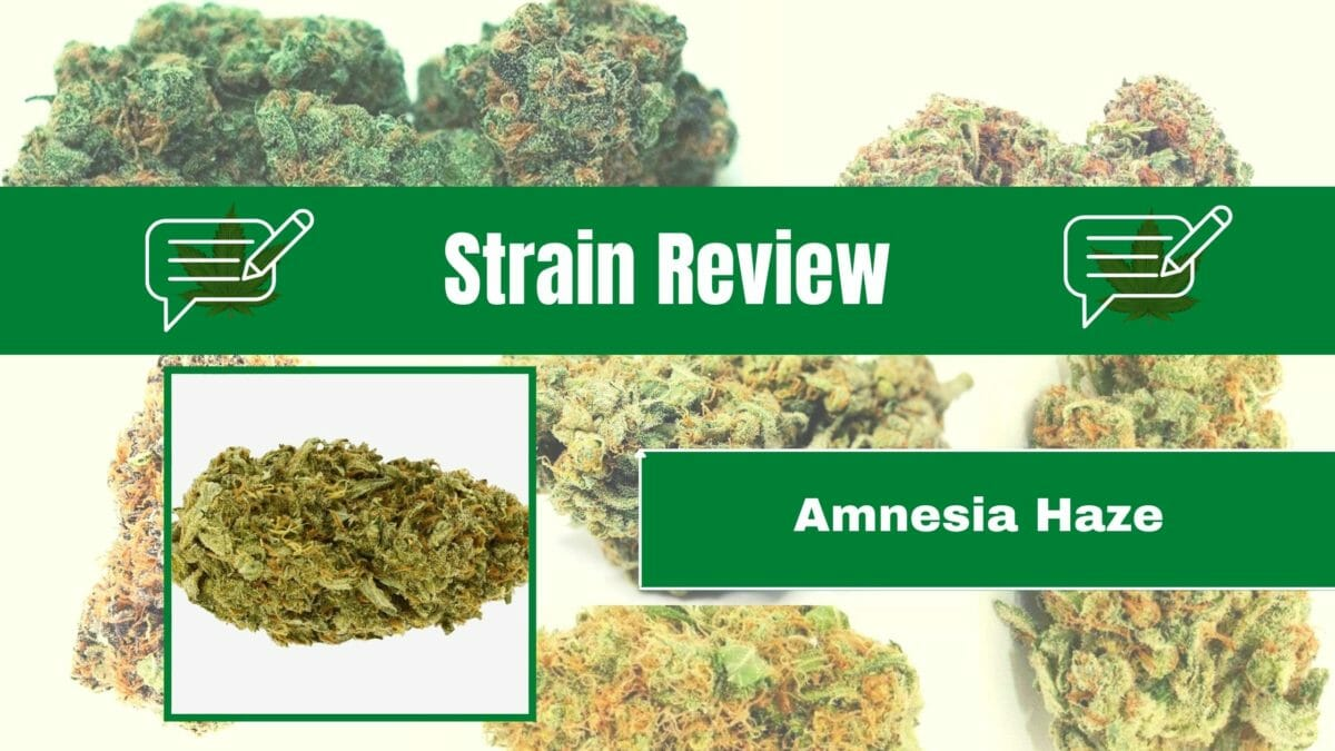 Amnesia Haze Strain Review