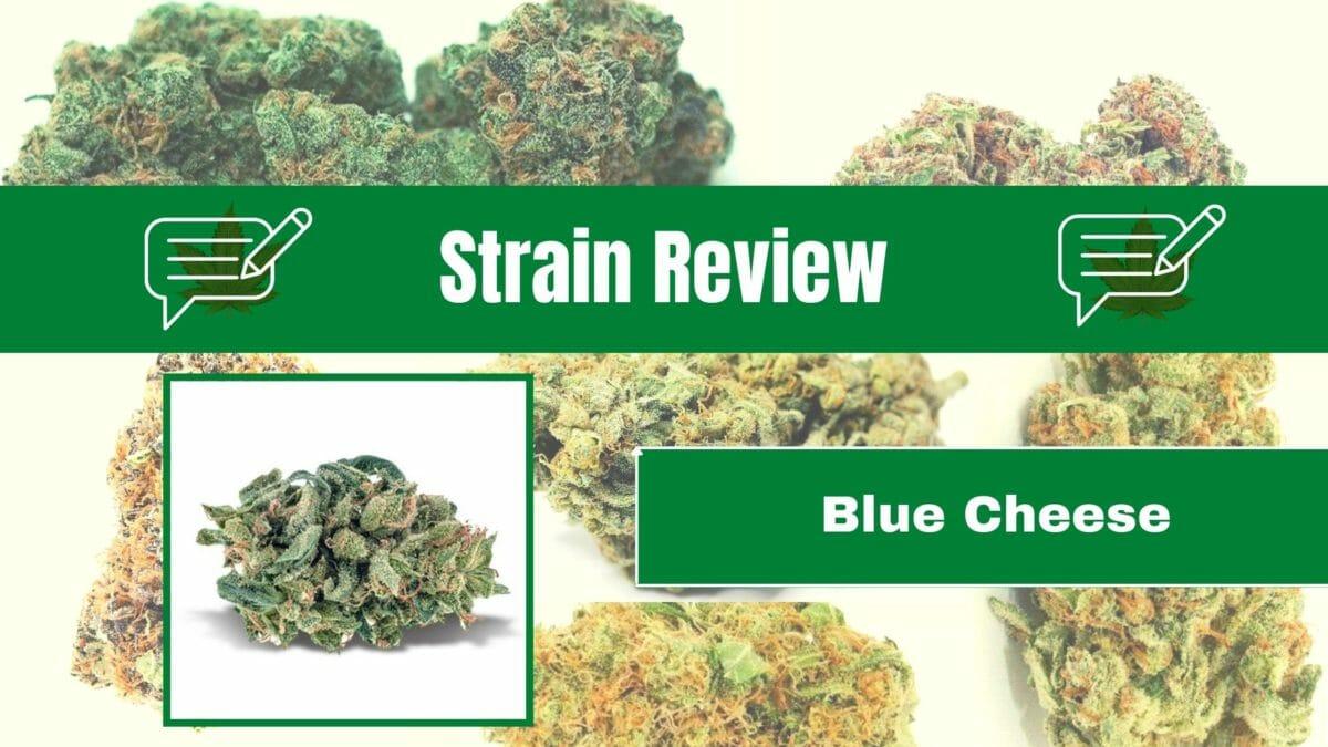 Cannabis Blue Cheese Strain Review